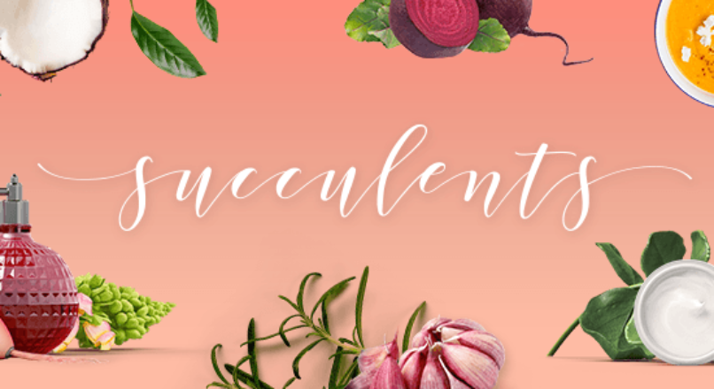 Succulents – Healthy Lifestyle and Wellness Theme